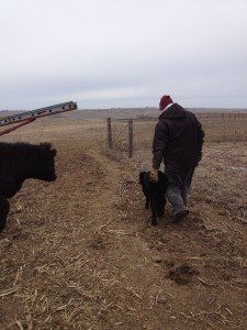 Sara and her husband, Kevin, prepare their cattle for an oncoming snow.