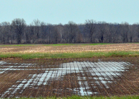fieldwater