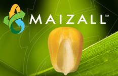 maizeall