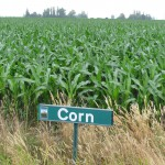 SIGN CORN SKAGIT